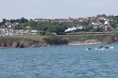 Dolphins Sited Off Waterside